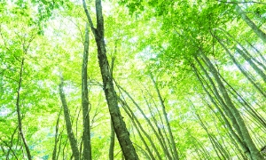 樹木の画像